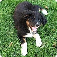 Adopt A Pet :: Darren - Phoenix, AZ