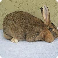 Adopt A Pet :: Nikki - Bonita, CA