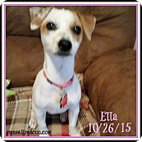 Adopt A Pet :: Ella In Victoria, Texas - Houston, TX