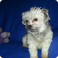 Adopt A Pet :: Quinn - Schofield, WI