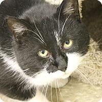 Adopt A Pet :: Peter - Medina, OH