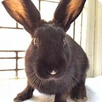 Adopt A Pet :: Monty Belle - Conshohocken, PA