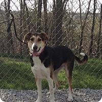 Adopt A Pet :: Bonnie - Atchison, KS