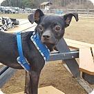 Adopt A Pet :: Ernie