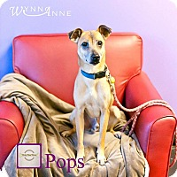 Adopt A Pet :: Pops - ottawa, ON