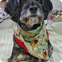 Adopt A Pet :: Lucy-adoption pending - Schaumburg, IL