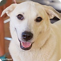 Adopt A Pet :: Daisy - Chattanooga, TN