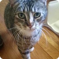 Adopt A Pet :: Parsnip - Hixson, TN