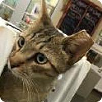 Adopt A Pet :: Fenway 6447 - Columbus, GA