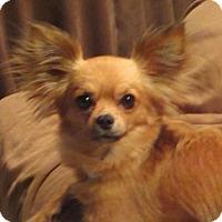 Adopt A Pet :: Diamond - Brunswick, ME