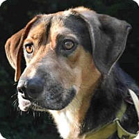 Adopt A Pet :: BRUCE - Pittsburgh, PA