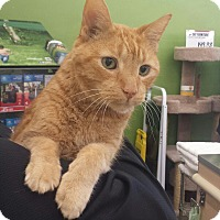 Adopt A Pet :: Rusty - Cherry Hill, NJ