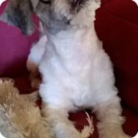 Adopt A Pet :: Beau - Campbell, CA