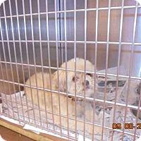 Adopt A Pet :: CODY - Lacombe, LA