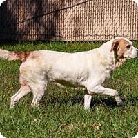 Adopt A Pet :: Pokey - Lincolnton, NC