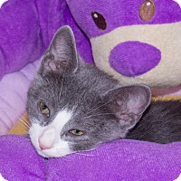 Adopt A Pet :: Sammy - Elmwood Park, NJ