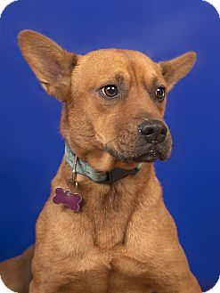 Shar Pei Mix Dog for adoption in Lyndhurst, New Jersey - EDGAR