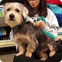 Adopt A Pet :: Joel - Carrollton, TX