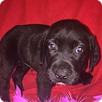 Adopt A Pet :: Duncan - Foristell, MO