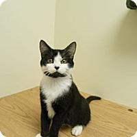 Adopt A Pet :: Lady Gray - Milwaukee, WI