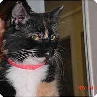 Adopt A Pet :: Sophia - Pendleton, OR