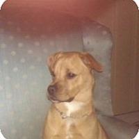 Adopt A Pet :: Benny - selden, NY