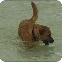 Adopt A Pet :: Paulina - Miami, FL