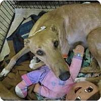 Adopt A Pet :: C'Ya (Boc's Say See Ya) - Chagrin Falls, OH