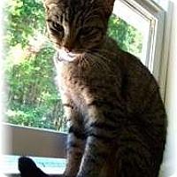 Adopt A Pet :: Spangles - Shelton, WA