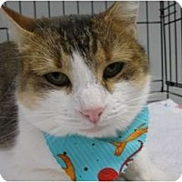 Adopt A Pet :: Ginger - Brea, CA