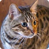 Adopt A Pet :: Bandit - Davis, CA