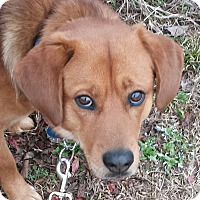 Adopt A Pet :: PARKER - Wilmington, NC