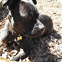 Adopt A Pet :: Bradley - Atlanta, GA