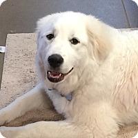 Adopt A Pet :: Morgan ADOPTED - Bloomington, IL