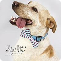 Adopt A Pet :: Biscoe - Shellsburg, IA