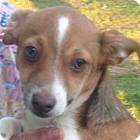 Adopt A Pet :: Happy - Plainfield, CT