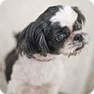 Adopt A Pet :: Rain Drop