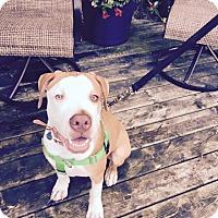 Adopt A Pet :: Snoopy - Villa Park, IL