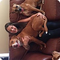 Adopt A Pet :: Evie - Homewood, AL