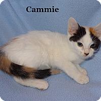 Adopt A Pet :: Cammie - Bentonville, AR