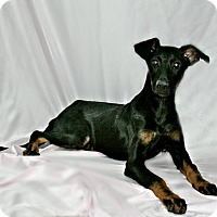 Adopt A Pet :: Rose - Lufkin, TX