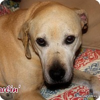 Adopt A Pet :: Darlin' - Rhome, TX