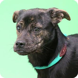 Mountain Cur Mix Dog for adoption in Aiken, South Carolina - Lovely