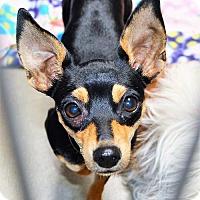 Adopt A Pet :: Heidi - San Jacinto, CA
