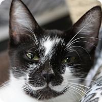 Adopt A Pet :: Alpha - Sarasota, FL