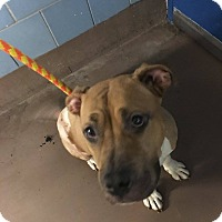 Adopt A Pet :: Sandy - Lowell, IN