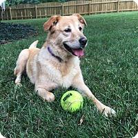 Adopt A Pet :: Mollie - Staunton, VA