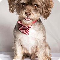 Adopt A Pet :: Poet - Baton Rouge, LA