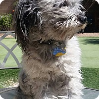 Adopt A Pet :: Buster bonded with Jesse - Las Vegas, NV
