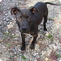 Adopt A Pet :: Winston - Warrenton, NC